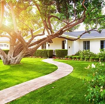 White house with green grass and beautiful tree