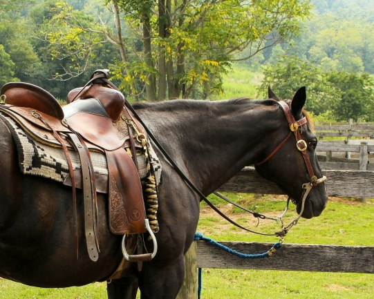 Discover mountainous horse country in the heart of LA.