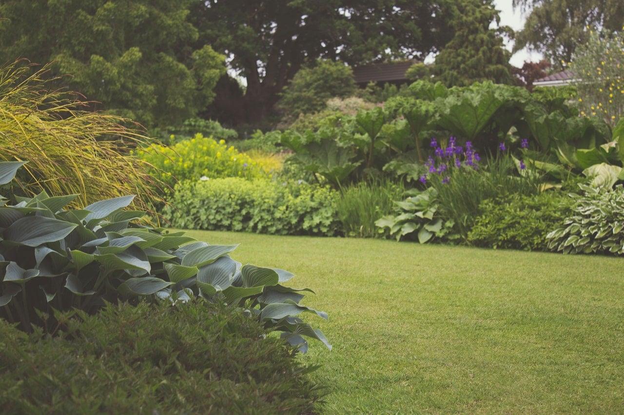 Lush green lawn.