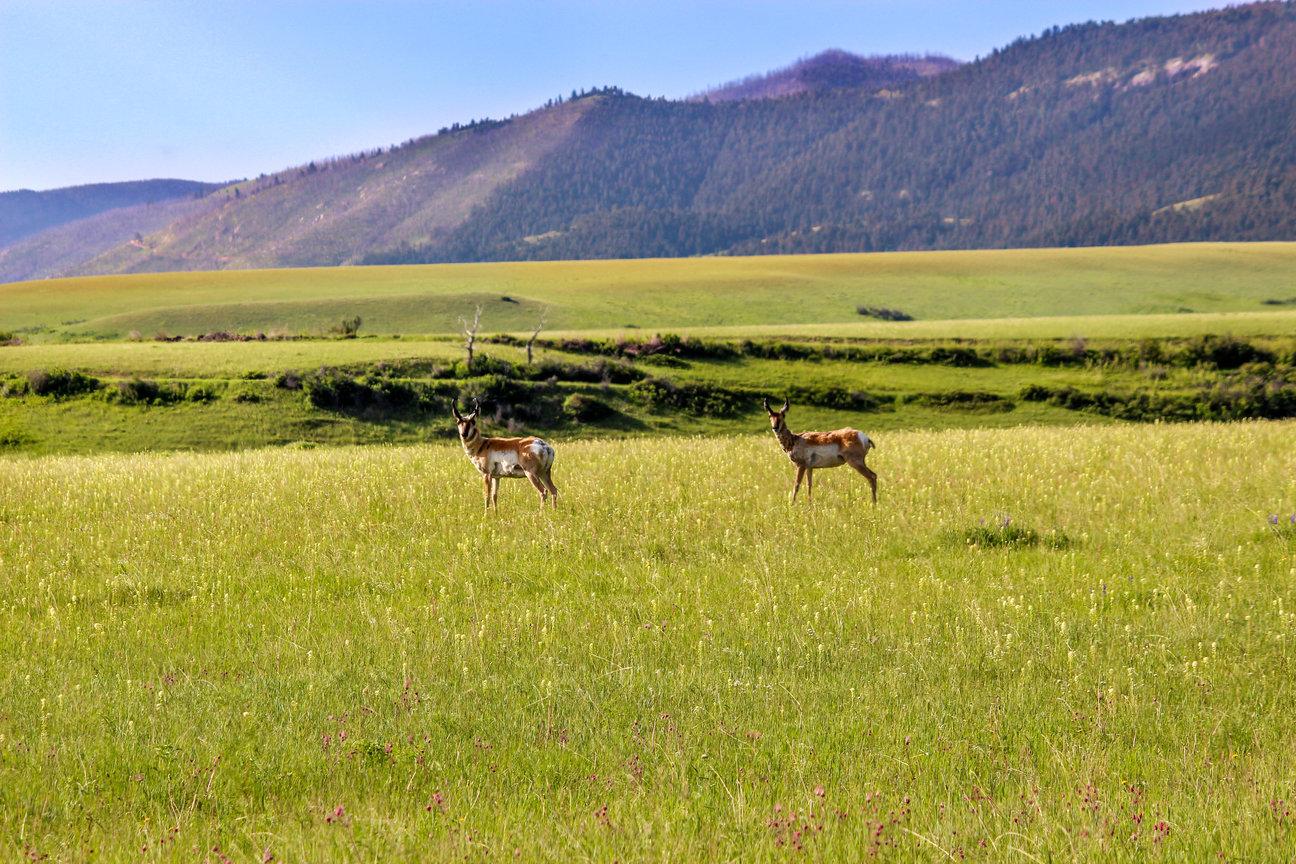 Wildlife & Hunting