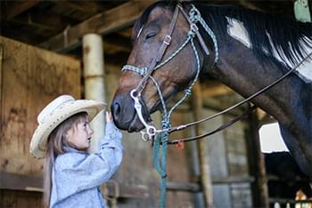 Child petting horse