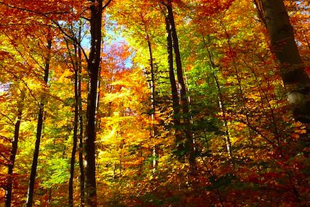 bright leaves on the trees in the fall