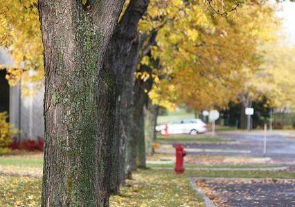oak trees in an established neighborhood