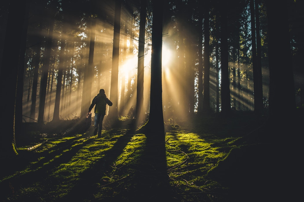 A person hiking through a forest