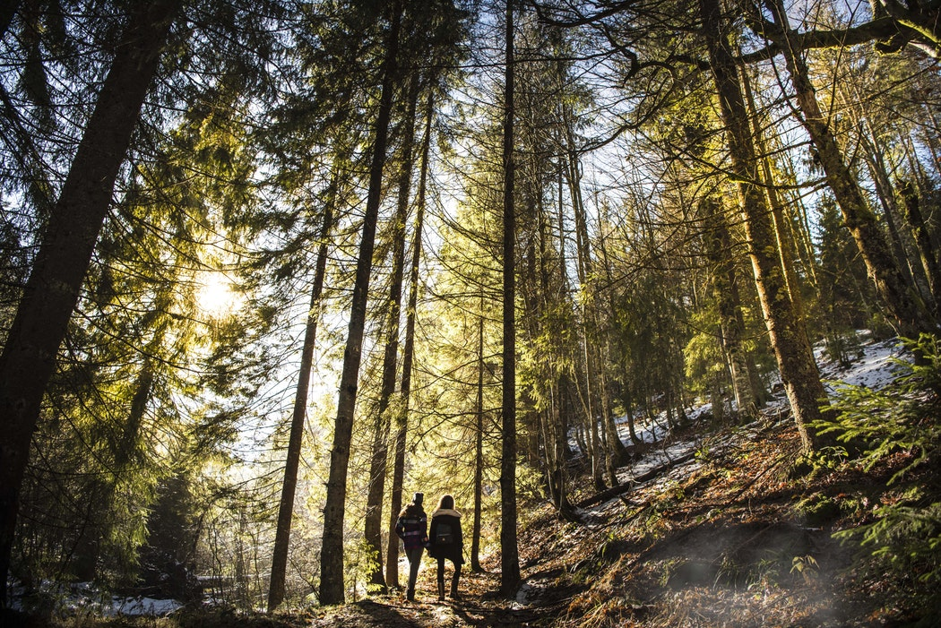 Two people hiking through a forest.