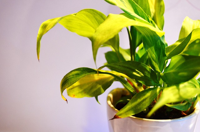 a green plant in a pot