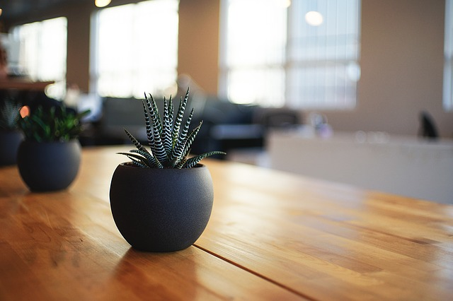 a plant on a living room table