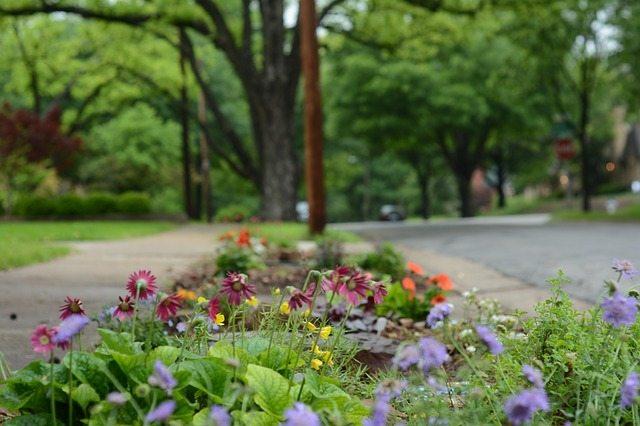 Flowers growing in a median between neighborhood streets.