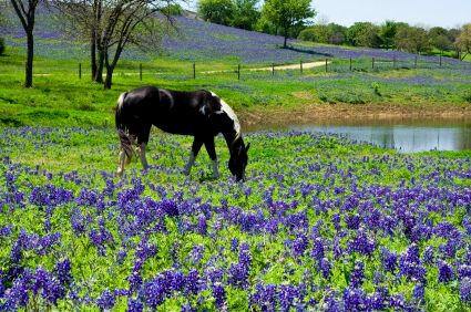 a horse in old-fashioned countryside