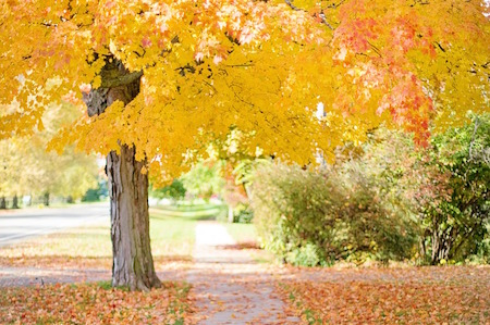 Tree in a neighborhood park in autumn.