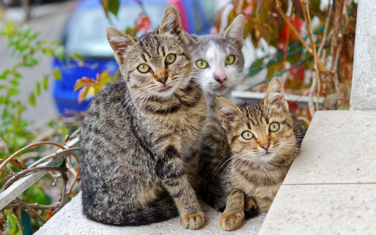Three tabby cats sitting together on a front porch.