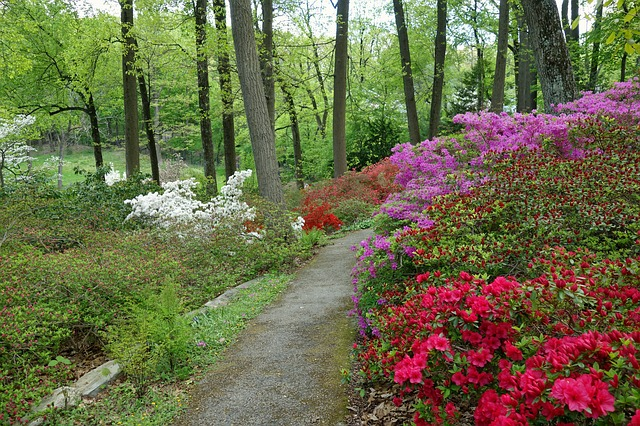 view of a trail surrounded by flowers and trees.