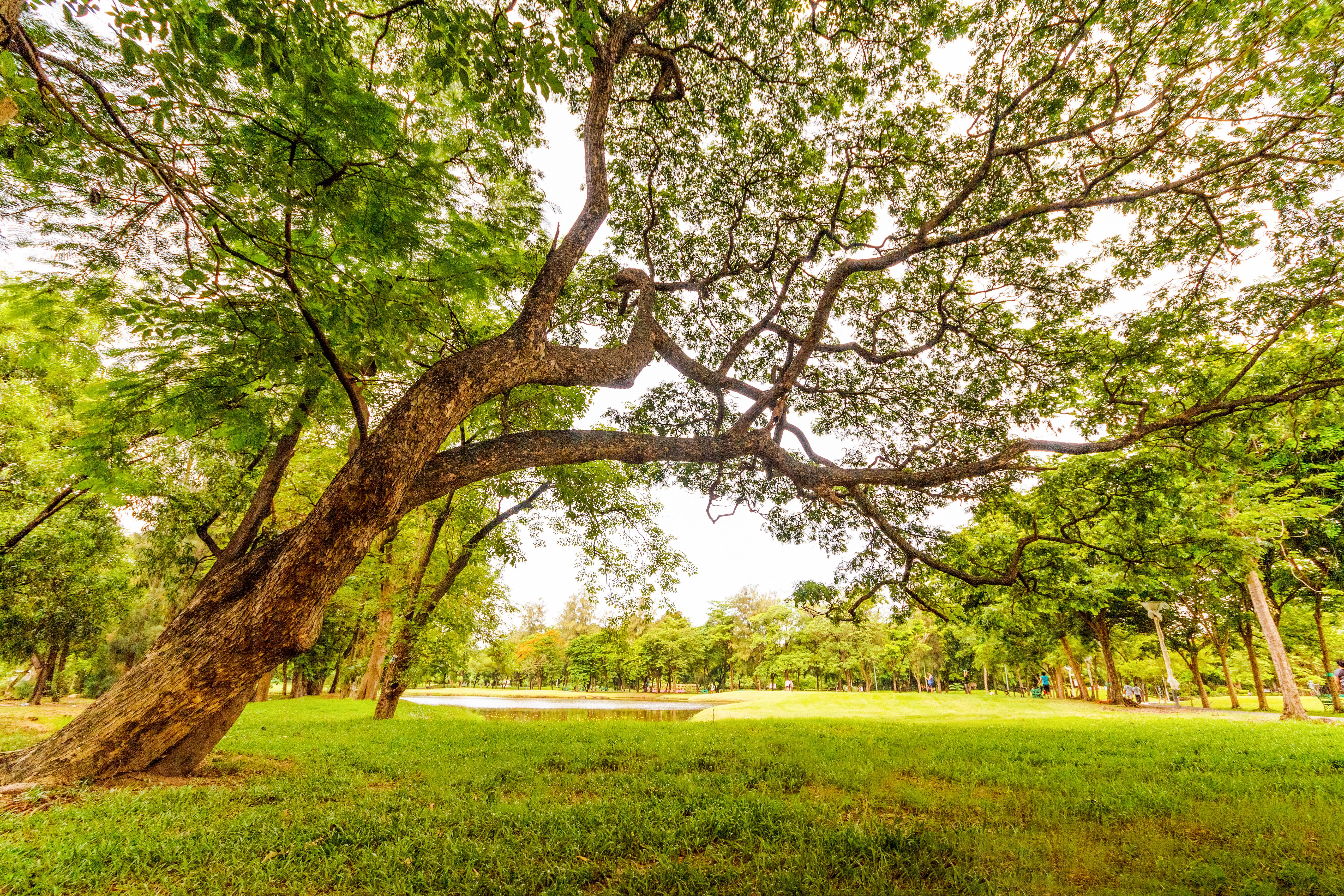 tree overlooking lake in grassy field
