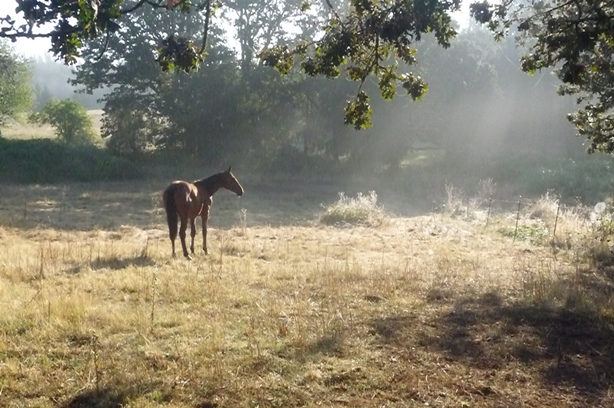 My yearling Oldenburg in the pasture, Salem Oregon