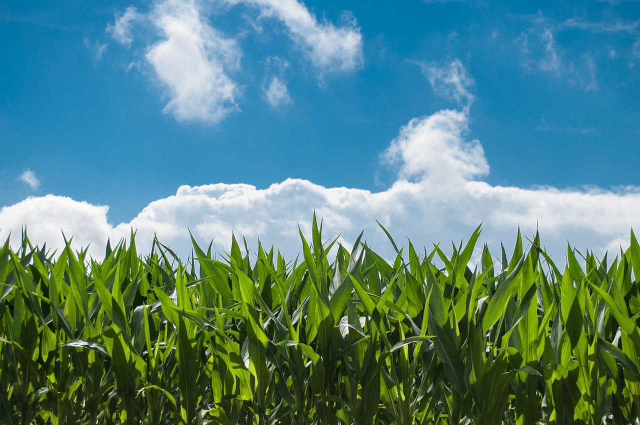 farmland for sale