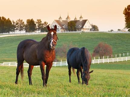 Horses browsing in rolling green fields