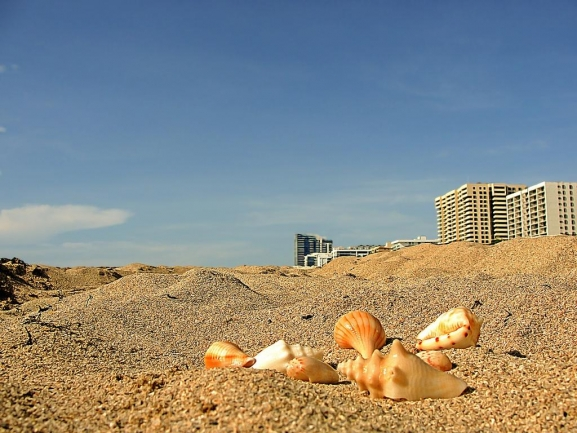 Live on the beach at Summer Winds Condos.
