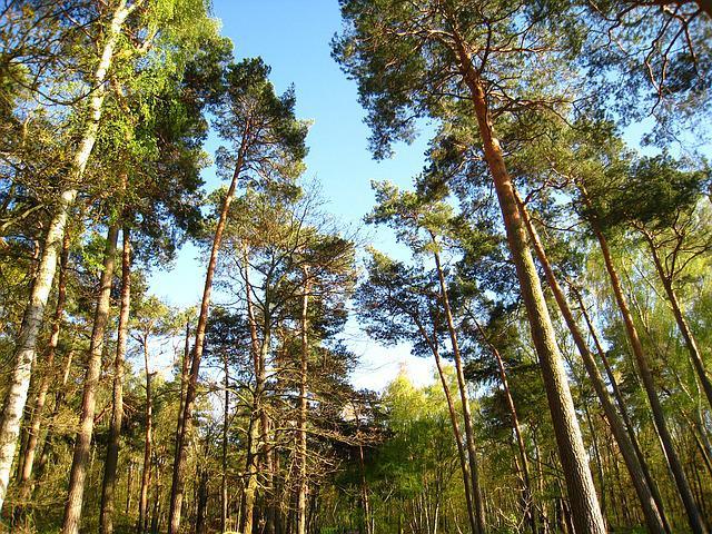 Enjoy the forests in Mandeville's parks