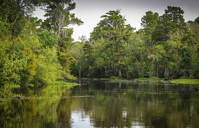 Harvey is close to beautiful bayous and natural parks