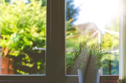 Sunny window with a plant in front of it.