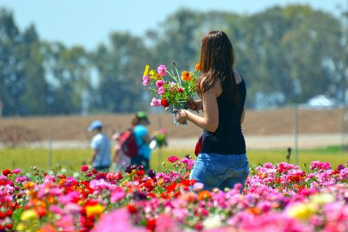 Woman walking through a field of pink flowers holding a bouquet.