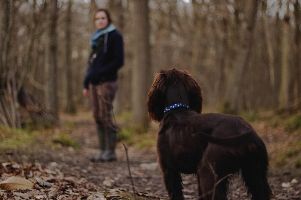 a person walking their dog