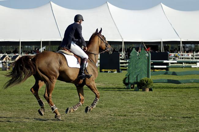 Equestrian luxury meets a thriving Raleigh job market in Portofino.