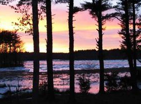 A view of the Great Bay National Estuarine Research Reserve between tall pine trees as the sun sets.