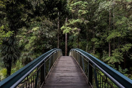 a bridge going into the trees at a park