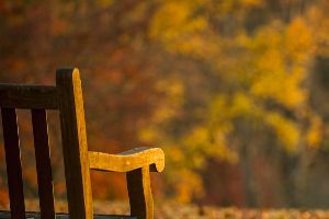 a wooden bench at a park during the fall