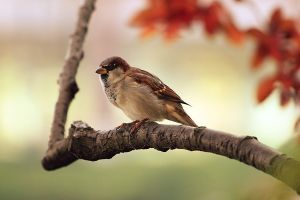 a sparrow sitting on a tree in the sunrise