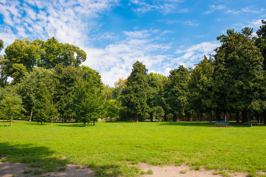 a beautiful park with trees and sunny sky