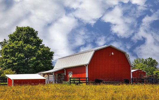 A red barn standing behind a yellow field encircled by a wooden fence on horse farm in Raleigh NC..