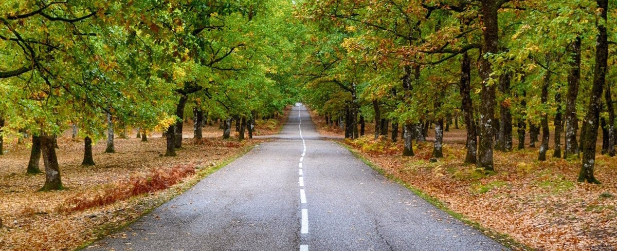A two-lane asphalt road between groves of mature trees.