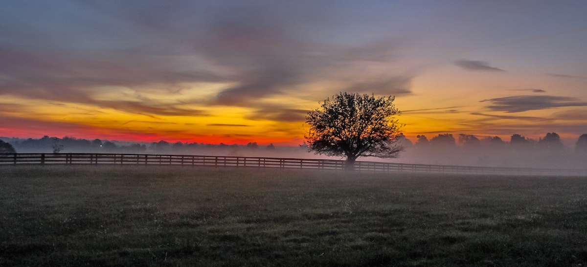 A tree and wooden fence on a farm encircled by fog on a farm for sale in Franklin County NC.