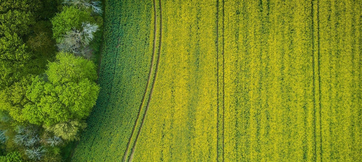 A yellow plowed field viewed from above on a Franklin county NC farm.