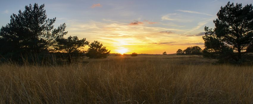 sunset photo of acreage for sale in the triangle with trees and pond