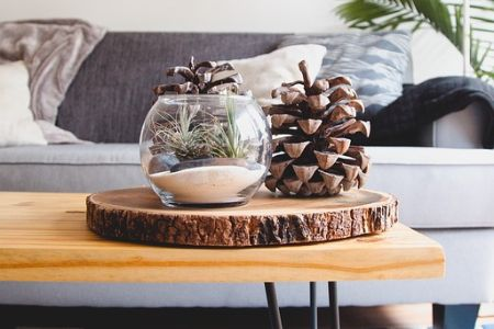 A coffee table with a terrarium full of pinecones and sand.