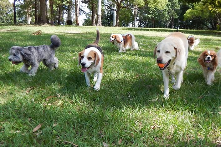 Port Liberte Dog Run