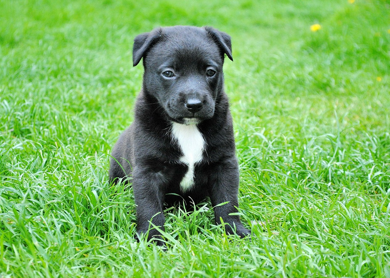 young puppy on the grass