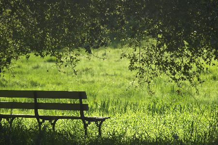 Empty park bench surrounded by trees and grass
