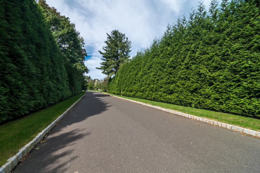 privacy trees along road