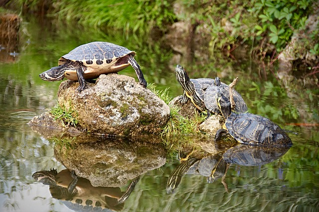 turtles standing on a rock