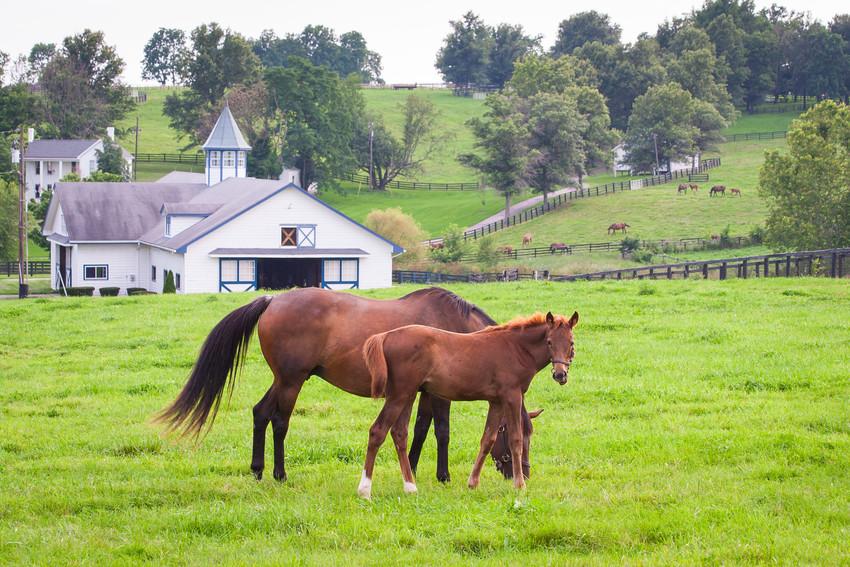 horse culture around alton va