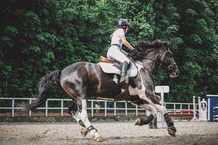 equestrian event in rural area