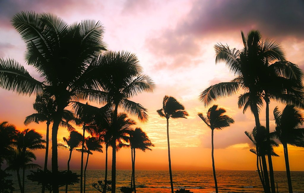 palm trees by the beach in Hawaii