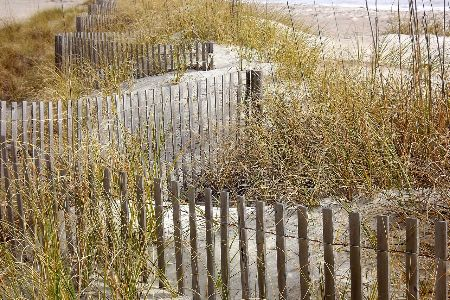 Sea grass poking out of sandy dunes at a beach.