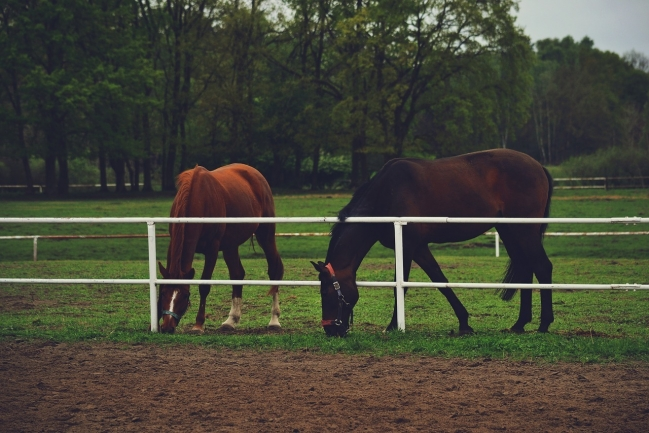 Portofino is ideal for horse enthusiasts.