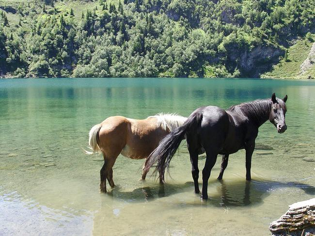 At Horse Lake. Not on the property!