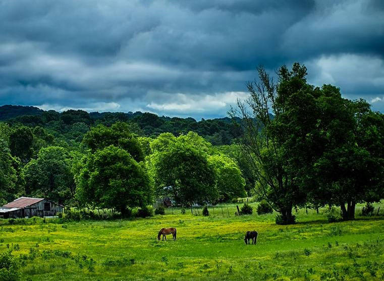 Cloudy sky above horses grazing in a green field